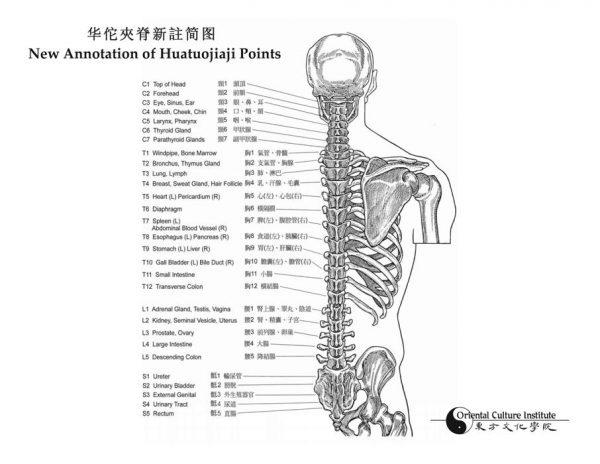 NEW Enhanced FULL COLOR Edition 2015 Anatomy & Point Location Book - Joe Lucier