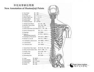 NEW Enhanced Edition 2015 Anatomy & Point Location Book (B&W) - Joe Lucier